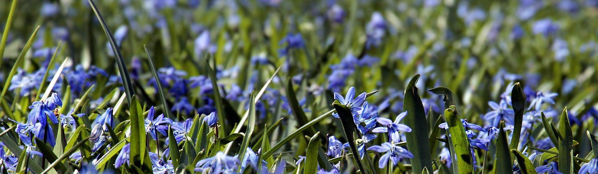 hedrickorchids.com